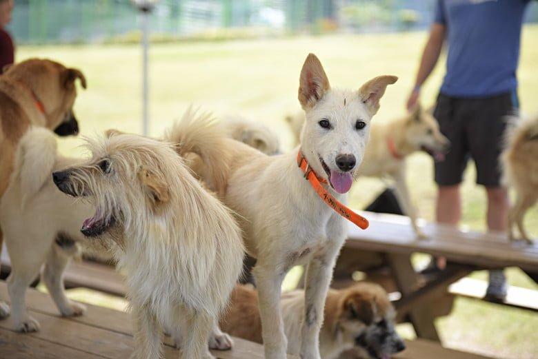 Dog Pack Leadership