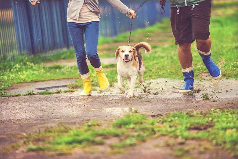 Dog Leash Walking